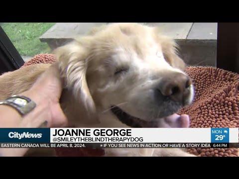 Smiley the dog battling cancer