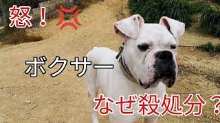 動物愛護団体つむぎ様ブログ https://profile.ameba.jp/ameba/tumugi040...