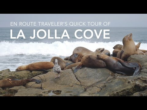 Visiting The Sea Lions At La Jolla Cove
