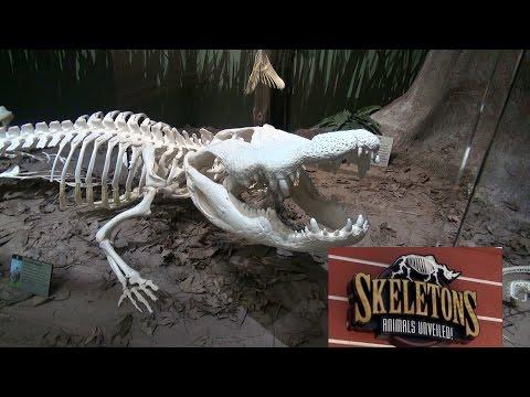 SKELETONS Animals Unveiled! New Bone Museum in Orlando Florida