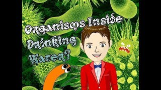 Are there Organisms inside Drinking Water? - The Science KID Experiments