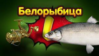 БЕЛОРЫБИЦА◦level◦Русская рыбалка 4