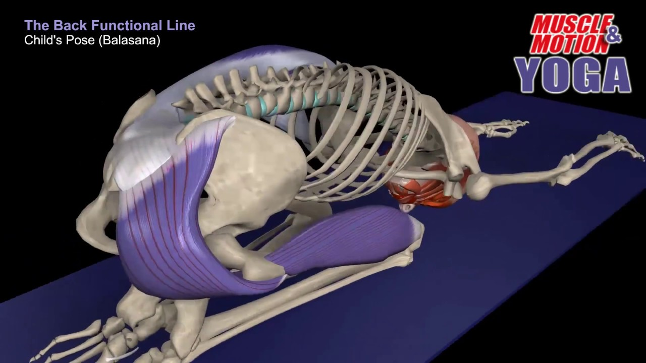 Yoga anatomy, Anatomy Trains - YouTube