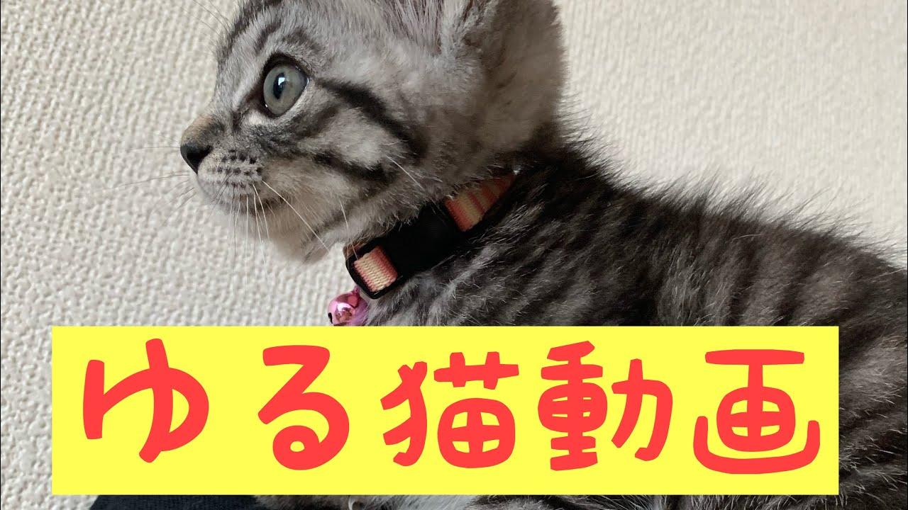 【ゆる猫動画】子猫に歌を聞いて貰ったら