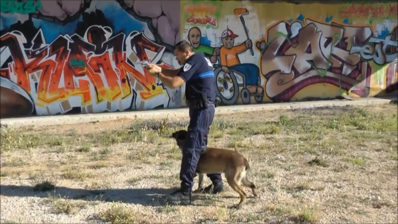 Obeissance d'un chien de Police - YouTube