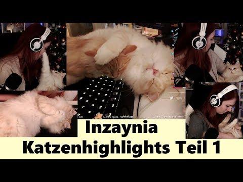 Inzaynia Katzenvideos - Lustige und süße Twitch Katzen-Highlights - Teil 1