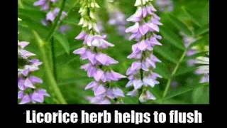 6 herbs for healthy liver