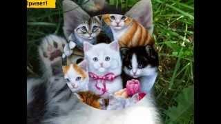 Киски. Выпуск 3. Милые котята.