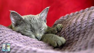 Adorable Sleepy Cats! ~ Cute Kittens & Relaxing Piano Music
