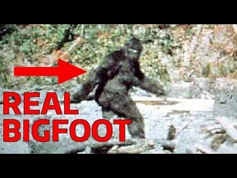 Imágenes de la breve filmación de un Big Foot auténtico Un ejemplar de hembra.