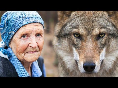 Бабушка приютила щенка, а тот оказался волком! Спустя год к ней в дом забрались воры...