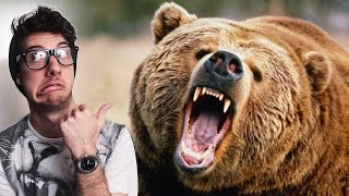 Add A Wild Bear To Your Footage! FILM BASICS - EP1