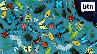 Insect Extinction - Behind the News