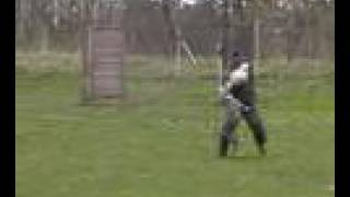 American Staffordshire Terrier Protection Dog Training