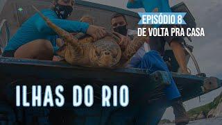 Soltamos a tartaruga recuperada de pneumonia - Webserie Ilhas do Rio Ep. #8