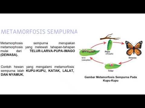 Life Cycle Part 2 Metamorfosis Sempurna Dan Tidak Sempurna Youtube