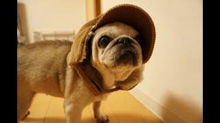かわいらしい帽子があったのでかぶせてみました^^