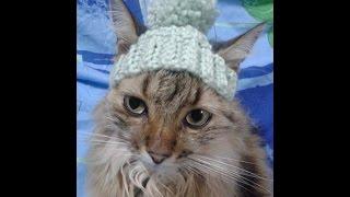 Игрушки и аксессуары для кошек:) Toys and accessories for cats