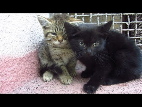 New cute kittens woke up on the street