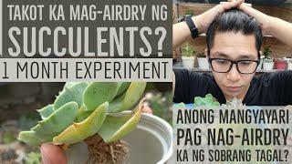 Air-Drying - Gaano Ba Talaga Katagal Puwede? Succulent Experiment
