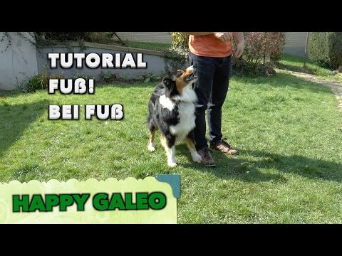 Fuß! Bei Fuß! Grundstellung Tutorial Hunde Kommando Trick - Australian Shepherd Clicker
