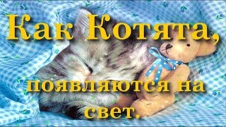 Сказка на Ночь Как Котята Появляются на Свет Сказку слушать