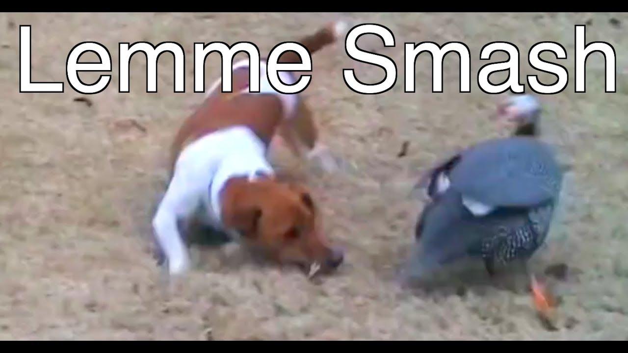 Lemme Smash - Animal Fails - YouTube