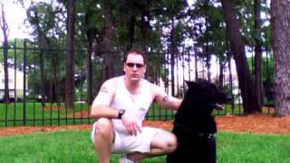 Dog Training: German Commands- #1 In The World
