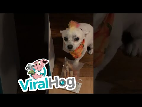 image for WATCH: Dog Opens Christmas Present Early