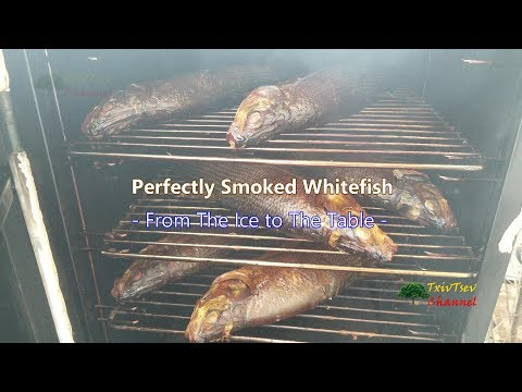 Perfectly Smoked Whitefish - From The Ice To The Table