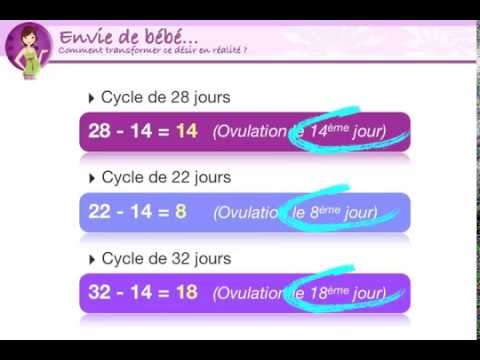 comment calculer son ovulation