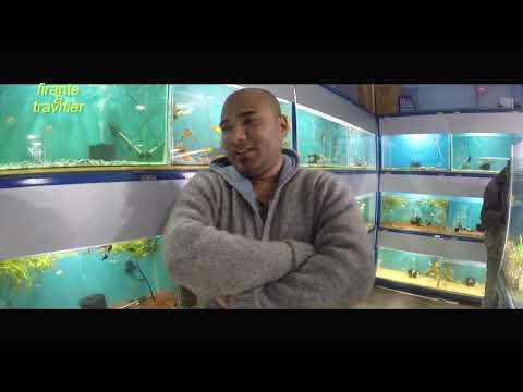 Life Inside An Aquarium