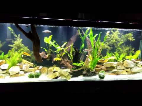 125 Gallon African Cichlid Tank Updated 3 1 2015 Youtube