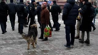 Собака VS бабка
