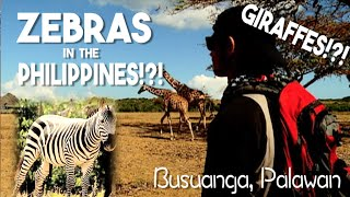 The Africa of the Philippines: THERE WERE GIRAFFES! (Busuanga, Palawan)