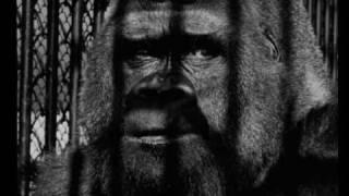 Mein Gorilla hat 'ne Villa im Zoo - Berlin 1933 - The Grammophonics Live