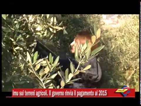 Imu sui terreni agricoli il governo rinvia il pagamento al for Pagamento imu