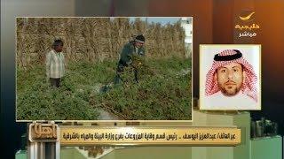 فايروس يصيب عدد من المزارع في المنطقة الشرقية ووزارة البيئة تعلق