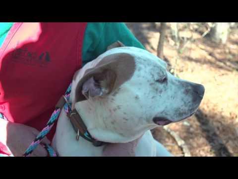 Volunteering for FOTAS at the Aiken County Animal Shelter