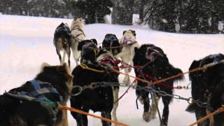 Oregon Trail Of Dreams Dog Sled Ride - Ludovico Einaudi: Fly