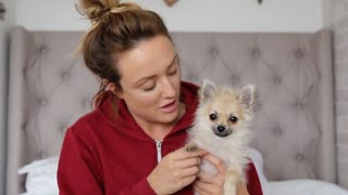 Introducing Baby, My Pomeranian Dog | Charlotte Crosby