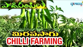Success Story of Chilli Farming - Paadi Pantalu | Express TV