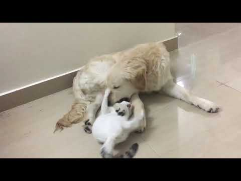 Funny cat and dog playing together - Funny video compilation