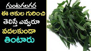 Eclipta alba | గుంటగలగర | Bhringaraj | Gunta galagara aaku Uses in telugu | Gunta gararaku