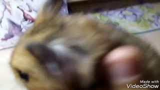 Боня вас любит!Клип маленького хомяка.Между нами любовь.