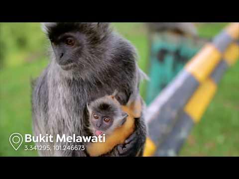 EXPERIENCE: Kuala Selangor