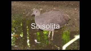 Soisolita - Salvador González - El Magistral