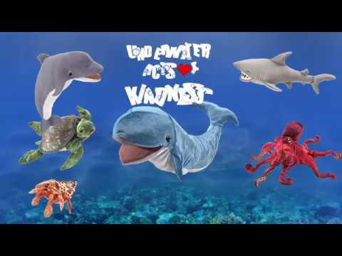 Underwater Acts of Kindness