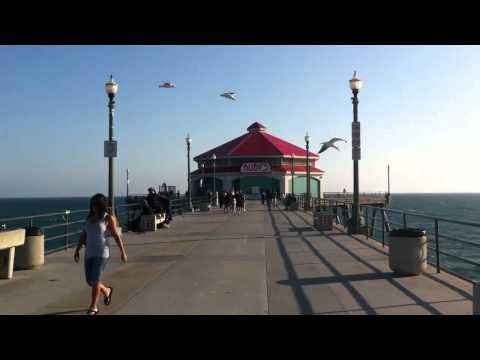 Seagulls vs wind