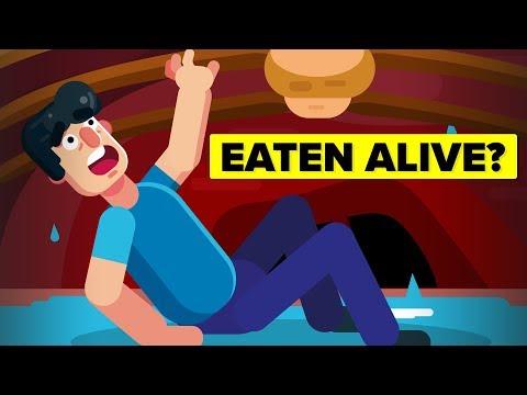 Horrific Ways People Have Been Eaten Alive